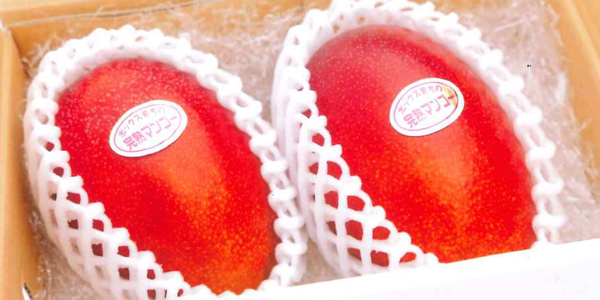 小美玉SUN完熟マンゴー